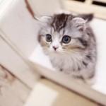 猫が噛む理由と噛み癖の直し方が丸分かり!