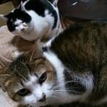 猫の防寒対策(室内・屋外)