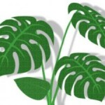 風水でトイレに置くと良い観葉植物は?種類は何?