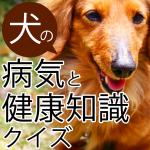 犬の病気と健康クイズ!
